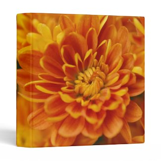 Orange Chrysanthemum Vinyl Binder
