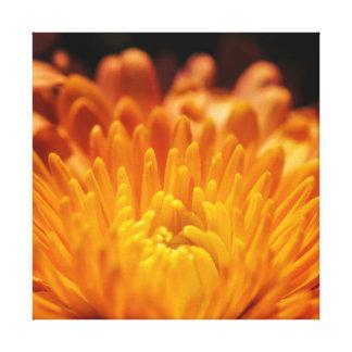 Orange Chysanthemum Flower Square Canvas Print