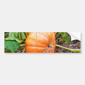 Orange Cinderella Pumpkin Bumper Sticker