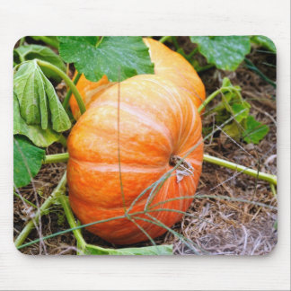 Orange Cinderella Pumpkin Mouse Pad