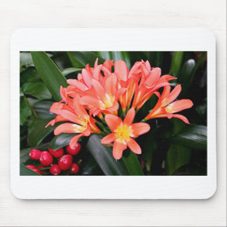 Orange Clivia flowers in bloom Mouse Pad