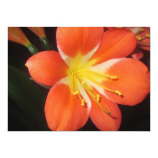 Orange Clivia Kaffir Lily Card