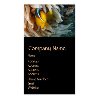 Orange Clown Fish Double-Sided Standard Business Cards (Pack Of 100)