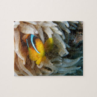 Orange Clown Fish Jigsaw Puzzle
