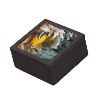 Orange Clown Fish Keepsake Box