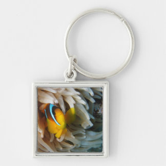 Orange Clown Fish Keychain