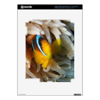 Orange Clown Fish Skins For iPad 3