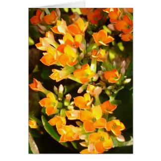 Orange clusters greeting card