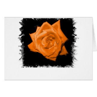 Orange colored rose against black back cards