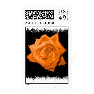 Orange colored rose against black back postage stamps