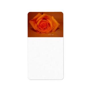 Orange colorized rose against orange background custom address label