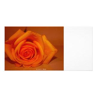 Orange colorized rose against orange background photo cards