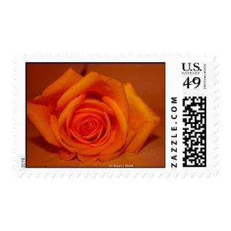 Orange colorized rose against orange background postage stamps