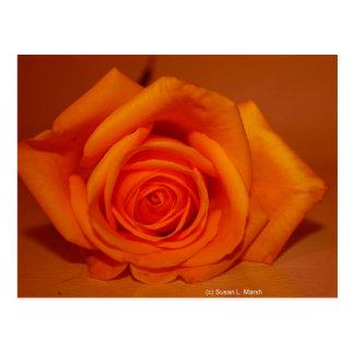 Orange colorized rose against orange background post card