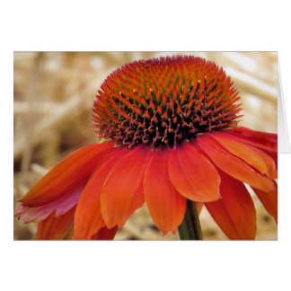 Orange Coneflower Card