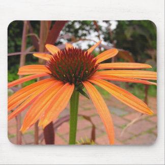 Orange Coneflower  Mouse Pad