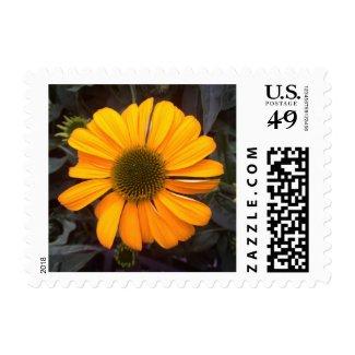 Orange Coneflower Stamps