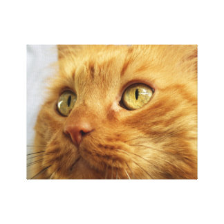 Orange Coon Cat Canvas Print