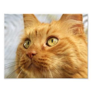Orange Coon Cat Print