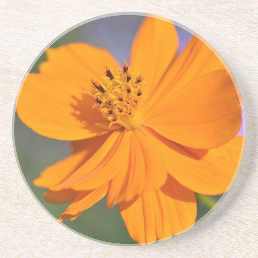 Orange cosmos flower coasters