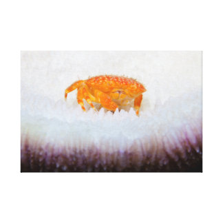 Orange Crab Canvas