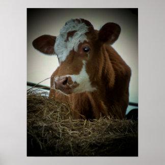 Orange Cream Cow Poster