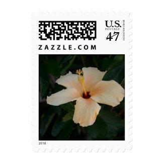 Orange Cream Hibiscus Flower postage stamps