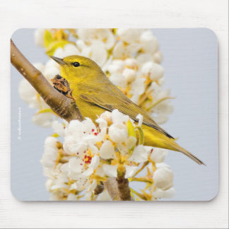Orange-Crowned Warbler Amid the Cherry Blossoms Mouse Pad