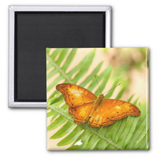 Orange Cruiser Butterfly Magnet