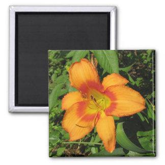 Orange Crush Daylily 2 Inch Square Magnet