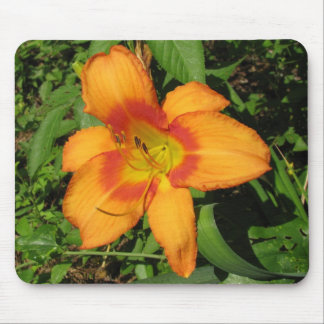 Orange Crush Daylily Mouse Pad
