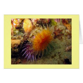 Orange Cup Coral Card