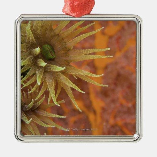 Orange cup coral ornaments