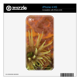 Orange cup coral skin for the iPhone 4