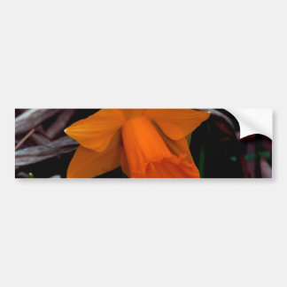 Orange Daffodil Car Bumper Sticker