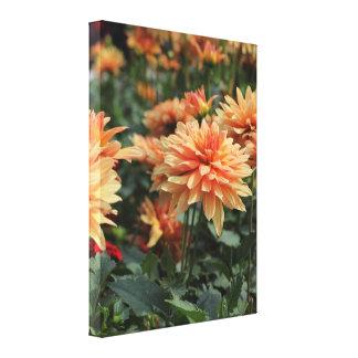 Orange Dahlia blossoms Gallery Wrapped Canvas