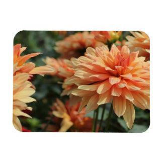 Orange Dahlia blossoms Magnets
