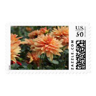 Orange Dahlia blossoms Postage