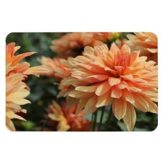 Orange Dahlia blossoms Rectangle Magnet
