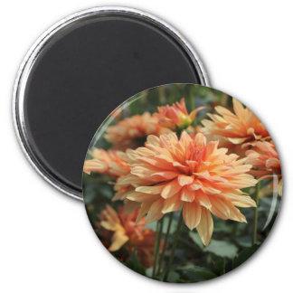 Orange Dahlia blossoms Refrigerator Magnet