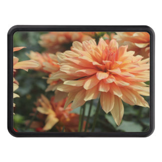Orange Dahlia blossoms Trailer Hitch Cover