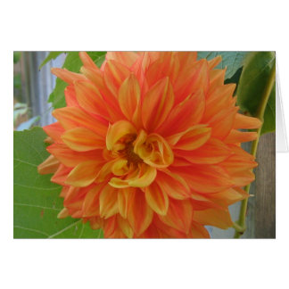 Orange Dahlia Card