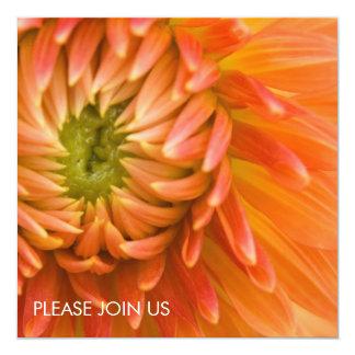 Orange Dahlia DSC4447 Card