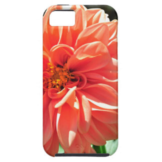 Orange Dahlia Flower Cover For iPhone 5/5S