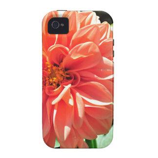 Orange Dahlia Flower iPhone 4/4S Cover