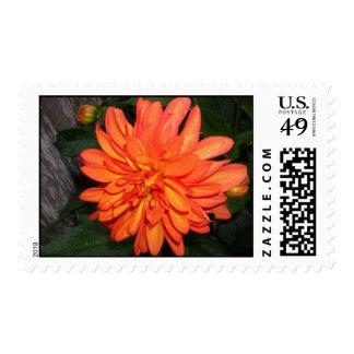 Orange dahlia postage stamp