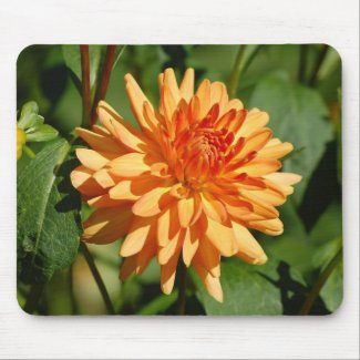 Orange dahlia with bud and sheets mouse pad