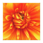 Orange Dahlia Wrapped Canvas Gallery Wrapped Canvas
