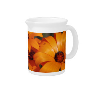 Orange Daisy and its meaning Pitcher