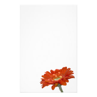 Orange Daisy Gerbera Flower Custom Stationery